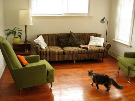 Gatos y sofás
