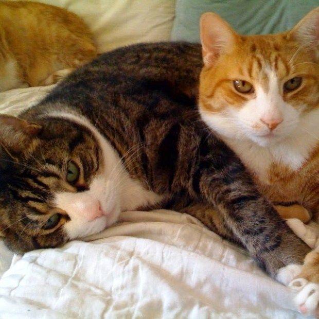 Los gatos aptos para todo tipo de casas y familias - Fotos de casas para gatos ...