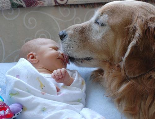 Perro y bebé en el hogar