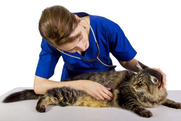 Veterinaria y un gato