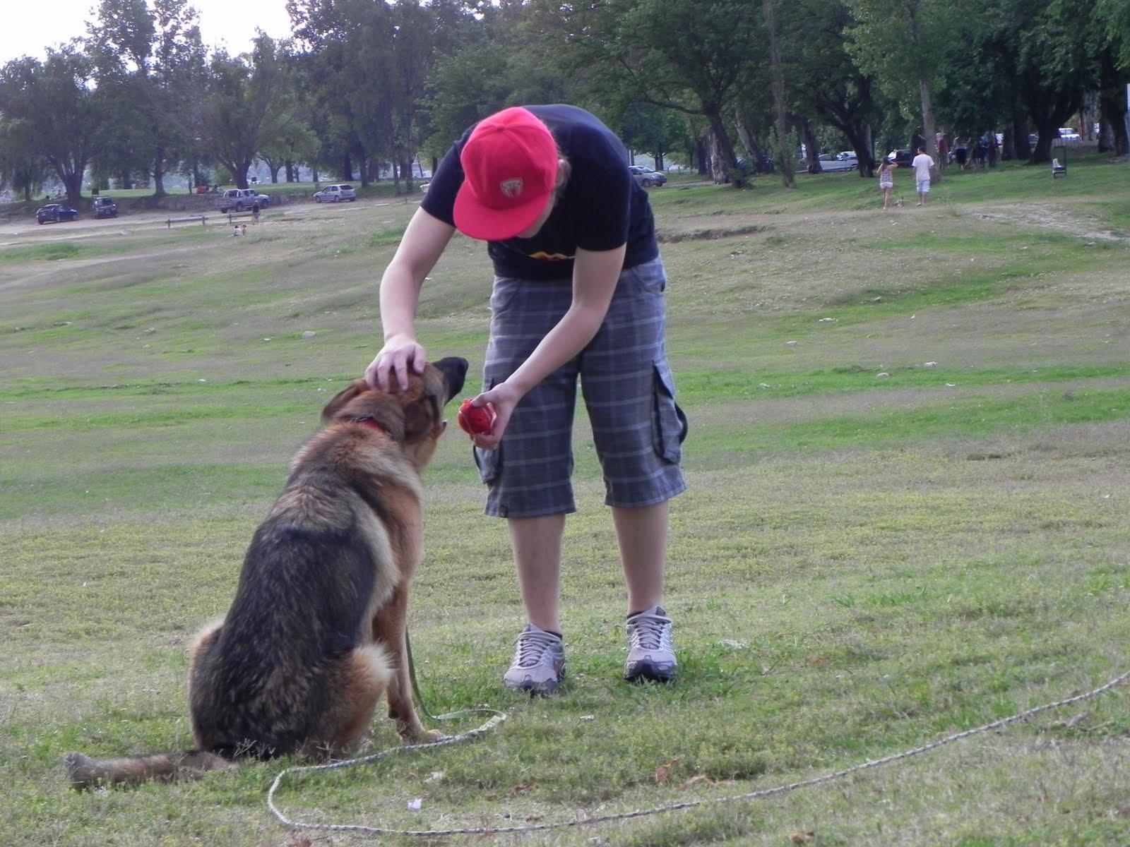 Perro obedeciendo a su dueño