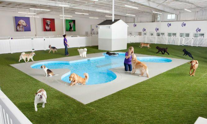 The Ark piscina para perros