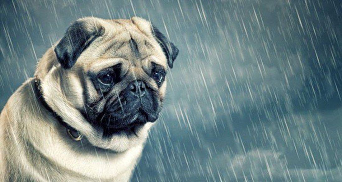 Mascotas con problemas emocionales