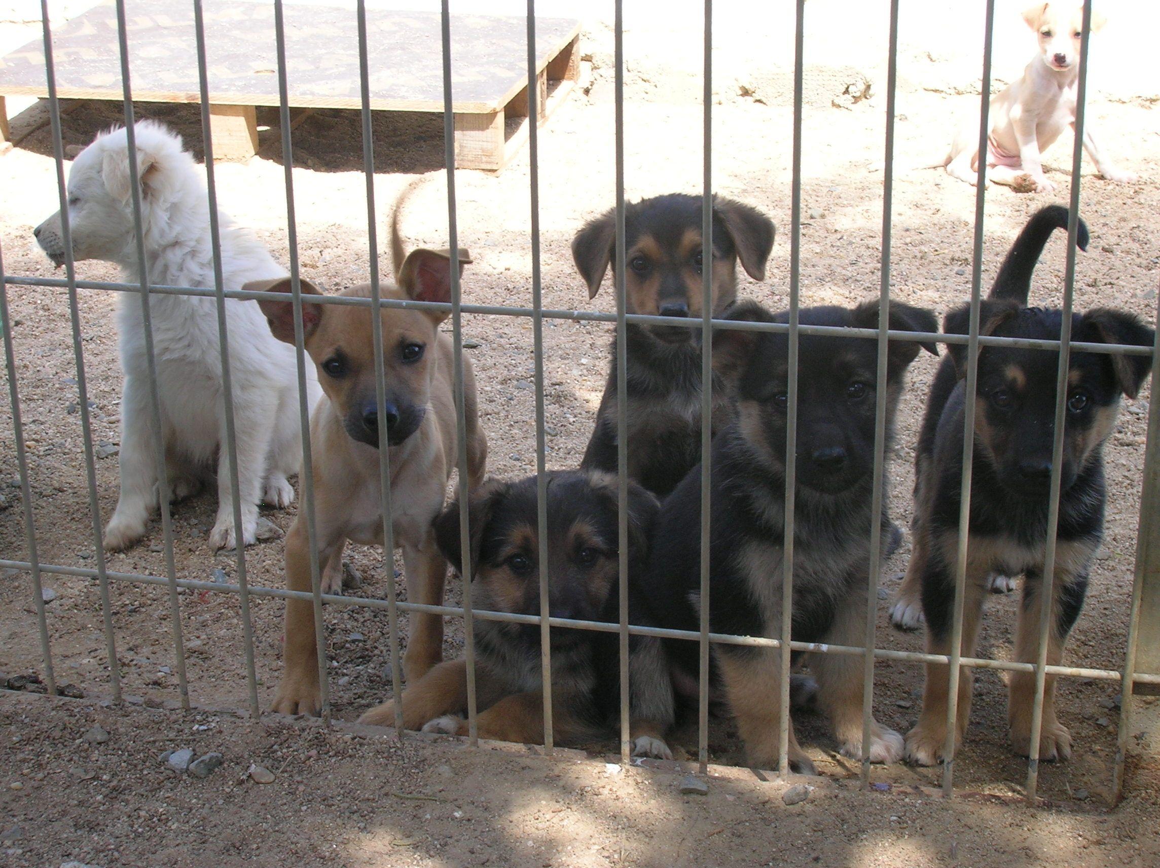 Cachorros en acogida