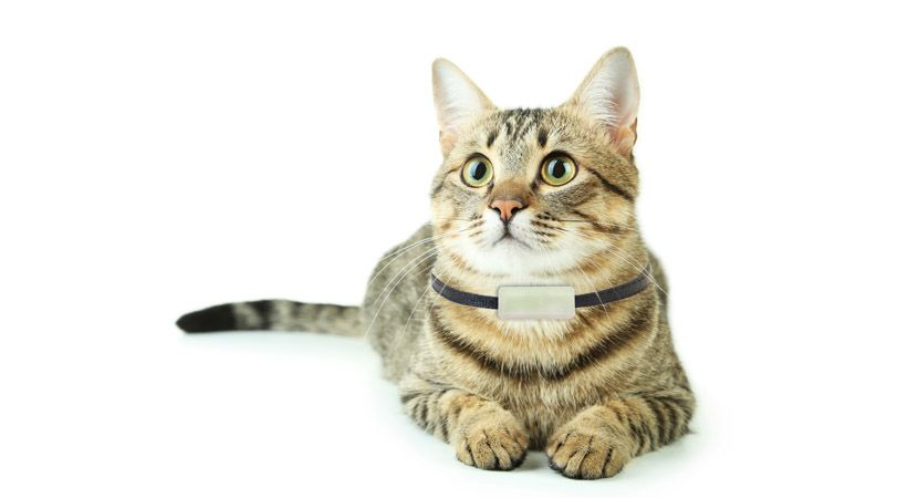 Collar para gatos