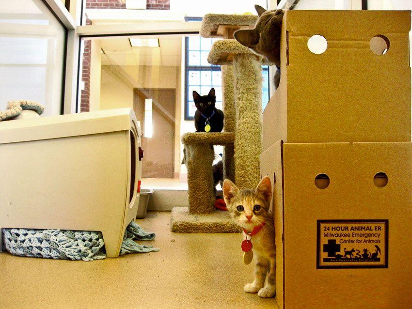 Los gatos y las cajas
