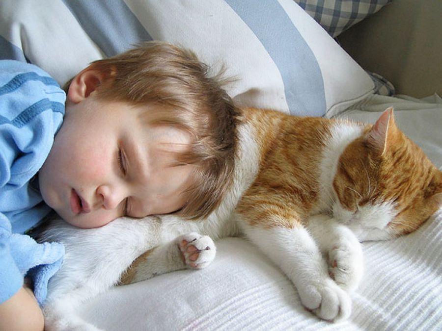 Niño y gato durmiendo juntos