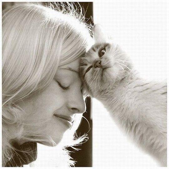 Gato cariñoso con su dueña