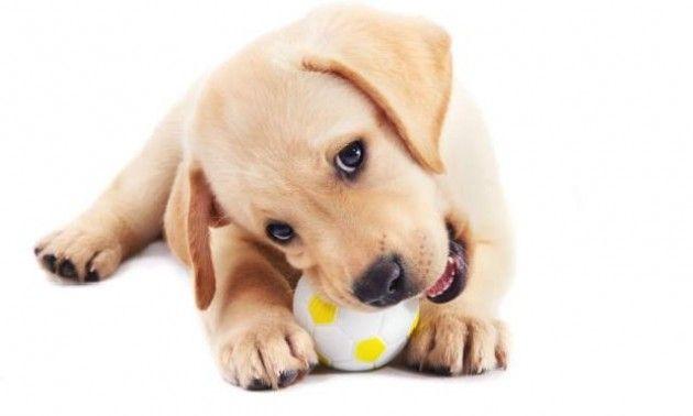 PlayDate, un nuevo juguete para perros y gatos