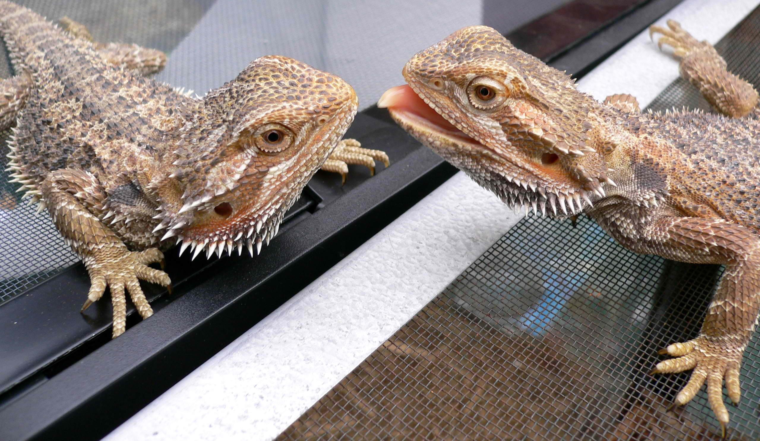Reptiles como mascotas