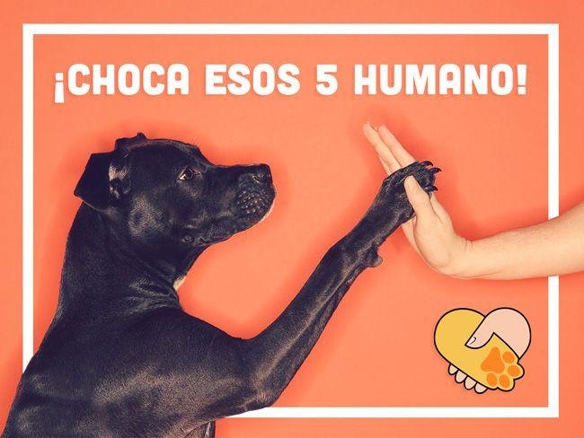 Test de la amistad entre perro y humano