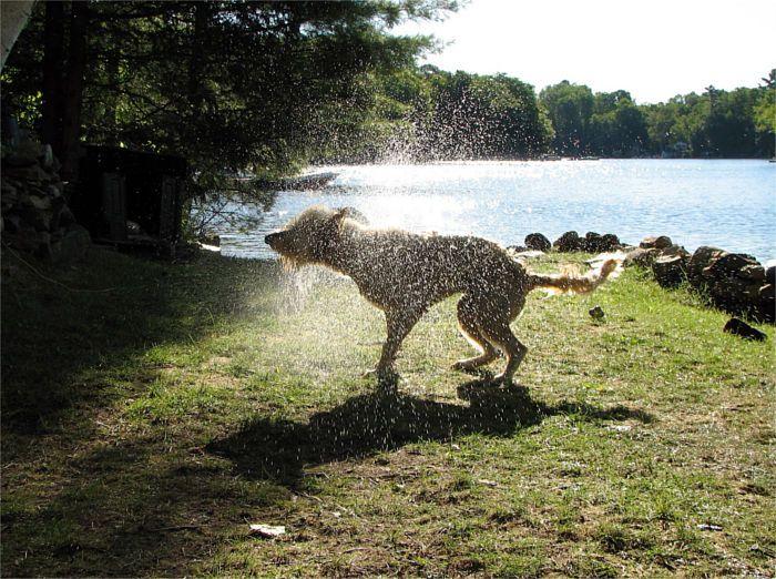Perro muy fresquito