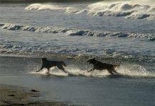Perros jugando en el agua