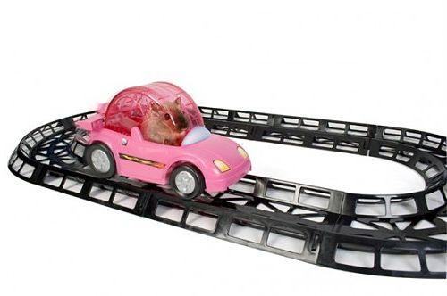 Circuito de coche para hámster
