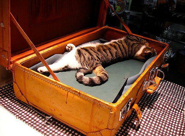 Tu gato va contigo donde sea