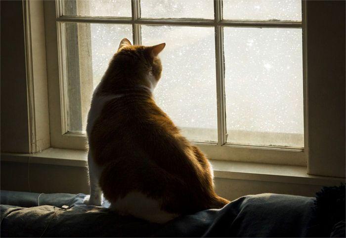 Tu gato está esperándote