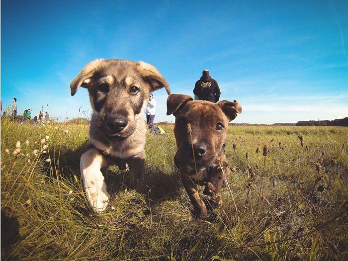 Perros curioseando