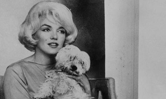 El Bichón Maltés de Marilyn