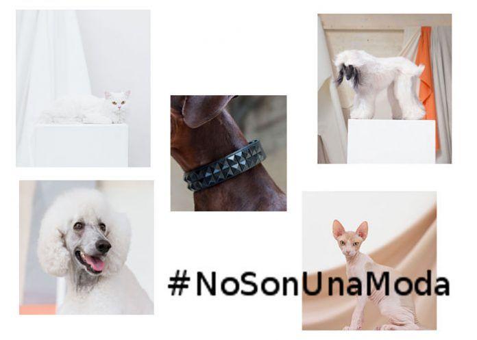 Campaña #NoSonUnaModa de la Fundación Affinity
