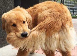 Perrito mordiéndose la cola